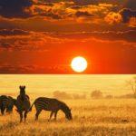 Необыкновенное сафари в Африке